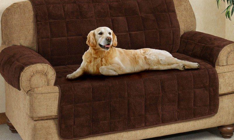 Как правильно выбрать мебельную ткань, если дома есть питомцы?